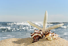 Seashells and starfish on a beach sand Royalty Free Stock Images