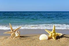 Seashells and starfish on a beach sand Stock Image