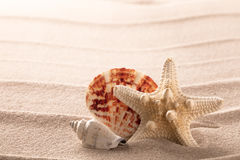 Seashells and starfish on beach sand royalty free stock photos