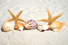 Seashells and Starfish on the beach. Some Seashells and Starfishes on the sand beach with copy space at the lower and the upper side stock photography