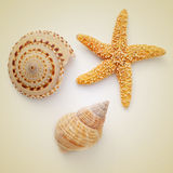 Seashells and starfish on a beige background, with a retro effec Royalty Free Stock Photos