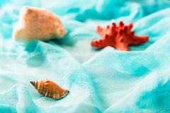 Seashells and starfish on cian cloth background stock photos