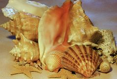 Seashells & Starfish Cluster Stock Photography