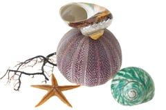 Seashells, starfish e ouriço-do-mar no branco Fotografia de Stock