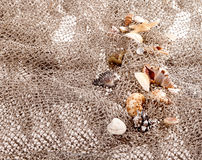 Seashells and starfish on the fishing network Stock Photos