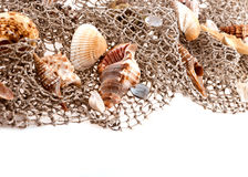 Seashells and starfish on the fishing network Stock Photo