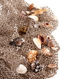 Seashells and starfish on the fishing network Stock Photography