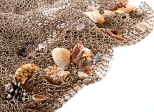 Seashells and starfish on the fishing network Royalty Free Stock Photography