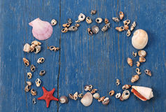 Seashells and starfish in the form of frames on a background of Stock Photography