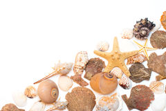 Seashells and starfish isolated on white  background Stock Photography