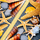 Seashells, starfish, pebbles Royalty Free Stock Images