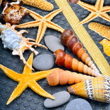 Seashells, starfish, pebbles on blue background  on whit Stock Photos