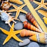 Seashells, starfish, pebbles on blue background  on whit Stock Photos