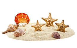 Seashells and starfish on pile of sand Stock Photo