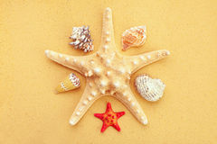 Seashells and starfish on sand Royalty Free Stock Photos