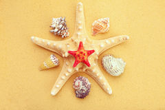 Seashells and starfish on sand Royalty Free Stock Photo