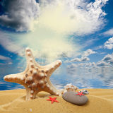 Seashells and starfish on sand Royalty Free Stock Photos