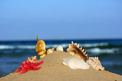 Seashells and starfish in the sand on the sea background Royalty Free Stock Photos