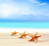 Seashells and starfish on the sandy beach Stock Photography