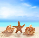 Seashells and starfish on the sandy beach Royalty Free Stock Image