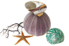 Seashells, starfish and sea-urchin on white. Seashells and starfish isolated on white background Stock Photography