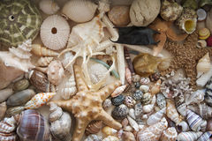 Seashells, starfish, and sharks teeth collage stock image