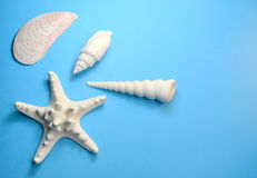 Seashells and starfish on turquoise background Royalty Free Stock Images