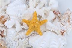 Seashells and starfish Royalty Free Stock Photo