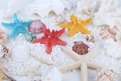 Seashells and starfish Stock Image