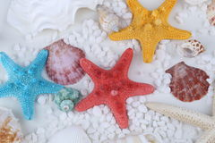 Seashells and starfish. On White background stock photos