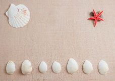 Seashells and starfish on wooden background with copyspace royalty free stock photos