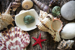 Seashells and starfish on wooden background selective focus Stock Photo