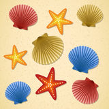 Seashells and starfishes Stock Image