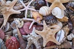 Seashells and starfishes Stock Photography