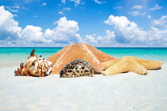 Seashells and starfishes. Some seashells and Starfishes on the sunny beach royalty free stock photography