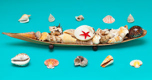 Seashells and stars on turquoise background Stock Image