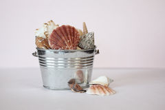 Seashells Still Life. A still life with a metal pail filled with seashells. Space for copy stock photos