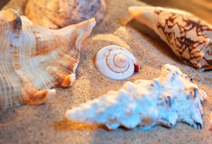 Seashells still life Stock Photo