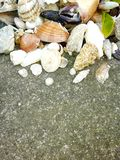 Seashells and stone on the ground, summer beach, claws, leaf, close up photo royalty free stock image