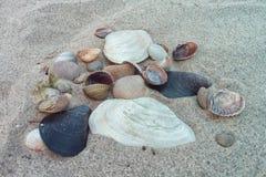 Seashells and stone on the sea Stock Photo