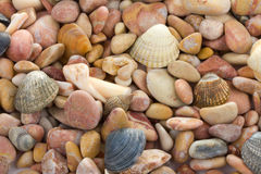Seashells and stones Stock Photos