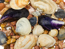 Seashells and stones Royalty Free Stock Image