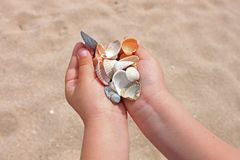 Seashells and stones in children`s hands on the background of the sea and sand, the ocean seashore, close-up, copy space stock photo