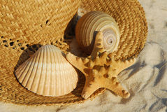 Seashells on straw hat Stock Photo