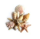 Seashells su priorità bassa bianca Fotografia Stock Libera da Diritti