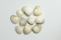 Seashells su priorità bassa bianca Fotografie Stock Libere da Diritti