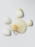 Seashells su priorità bassa bianca Fotografia Stock