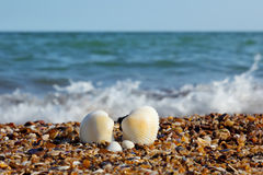 Seashells su una spiaggia fotografia stock libera da diritti