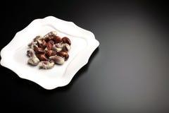 Seashells suisses de chocolat de la plaque de fantaisie blanche Photographie stock libre de droits