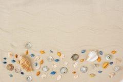 Seashells sulla sabbia Fondo di vacanze estive del mare con spazio per il testo fotografia stock